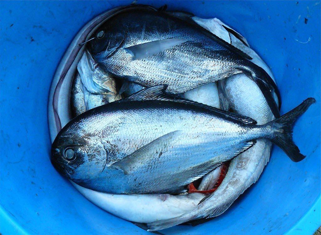 trodevna tuna dijeta