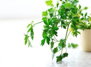 Čaj od peršunovog lista za dobro zdravlje
